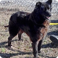Adopt A Pet :: Baby-ADOPTED - Somerset, KY
