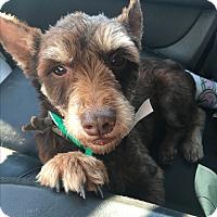 Adopt A Pet :: Schroeder - Phoenix, AZ