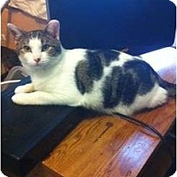 Adopt A Pet :: Addison aka. baby p - Pittstown, NJ