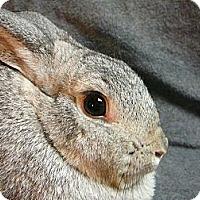 Adopt A Pet :: Miranda - Newport, DE