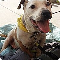 Adopt A Pet :: Ruby - Fowler, CA