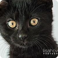 Adopt A Pet :: Zoé - Montreal, QC