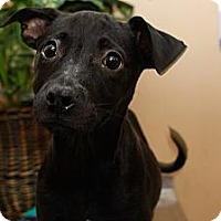 Adopt A Pet :: Caring Corrine - Brooklyn, NY