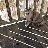 Adopt A Pet :: Tibby - Milton, FL