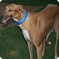 Adopt A Pet :: WW's Chokito