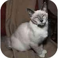 Adopt A Pet :: Ceyan - Cleveland, OH