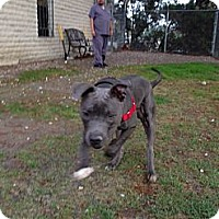 Adopt A Pet :: Samson - San Diego, CA