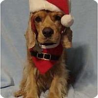 Adopt A Pet :: Arthur Christmas - Sugarland, TX