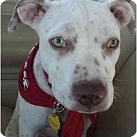 Adopt A Pet :: Izzy - Los Angeles, CA