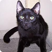 Adopt A Pet :: K-Kim1-Bogey - Colorado Springs, CO