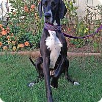 Adopt A Pet :: Destiny - Manassas, VA