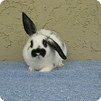 Adopt A Pet :: Kenny - Bonita, CA