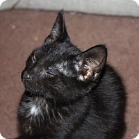 Adopt A Pet :: Carbon (LE) - Little Falls, NJ