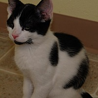 Adopt A Pet :: Mickey Mouse - Salem, WV