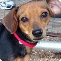 Adopt A Pet :: Carlos Carlsbad - Houston, TX