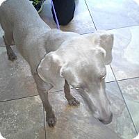 Adopt A Pet :: Mylie - El Paso, TX