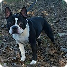 Adopt A Pet :: Calypso