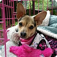Adopt A Pet :: Tara - Lodi, CA