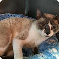 Adopt A Pet :: Bamboo - Topeka, KS