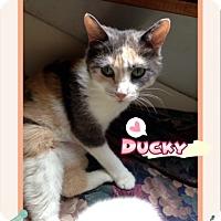Adopt A Pet :: Ducky - Ravenna, TX