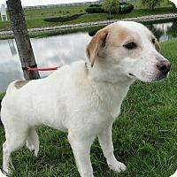 Adopt A Pet :: Casper - Lewisville, IN