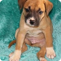 Adopt A Pet :: Chuck - Chester Springs, PA