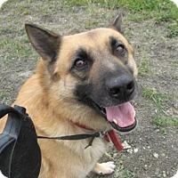 Adopt A Pet :: Shep * - La Honda, CA