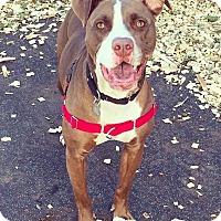Adopt A Pet :: Gala - Oak Park, IL