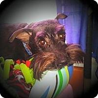 Adopt A Pet :: Maxie ( PA ) - Akron, OH