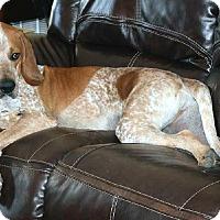 Adopt A Pet :: Loving Wrangler - Dallas, TX