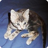 Adopt A Pet :: Jennifer L - Richmond Hill, ON