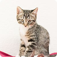 Adopt A Pet :: John - Fountain Hills, AZ