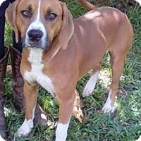 Adopt A Pet :: Scotty - Orlando, FL