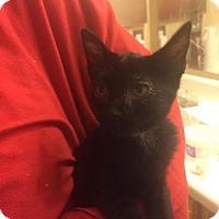 Adopt A Pet :: Shrek - Glendale, AZ