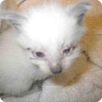 Adopt A Pet :: TAFFY - Jacksonville, FL