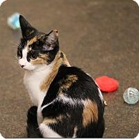 Adopt A Pet :: Pumpkin - Glendale, AZ