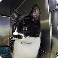 Adopt A Pet :: Rayen - Elyria, OH