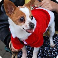 Adopt A Pet :: Forrest - Madison, AL