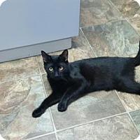 Adopt A Pet :: Bagheera - Rincon, GA