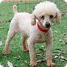Adopt A Pet :: Fifi (must go with Gigi), Gigi (must go with Fifi)