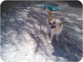 Terrier (Unknown Type, Medium) Mix Dog for adoption in Thatcher, Arizona - Buddy