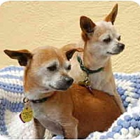 Adopt A Pet :: Alice&Gertrude - San Francisco, CA
