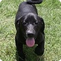 Adopt A Pet :: Jackie - Brattleboro, VT