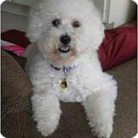 Adopt A Pet :: Coco - La Costa, CA