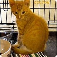 Adopt A Pet :: Colton - Jacksonville, FL