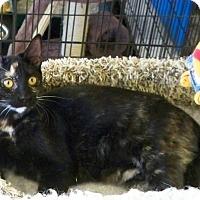 Adopt A Pet :: Topaz N - Sacramento, CA