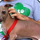 Adopt A Pet :: Champ