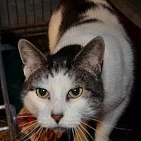 Adopt A Pet :: Ivy - Taftville, CT