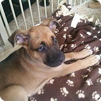 Adopt A Pet :: Buttercup - Burlington, NJ