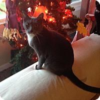 Adopt A Pet :: Precious - Kelso/Longview, WA